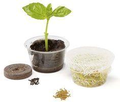 Basil & Sprout Garden