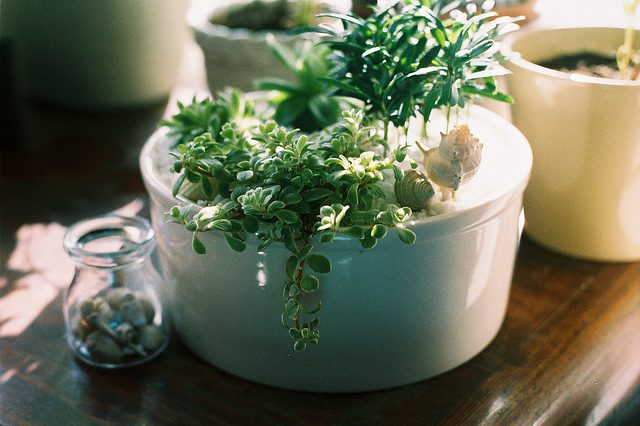 gec_houseplant
